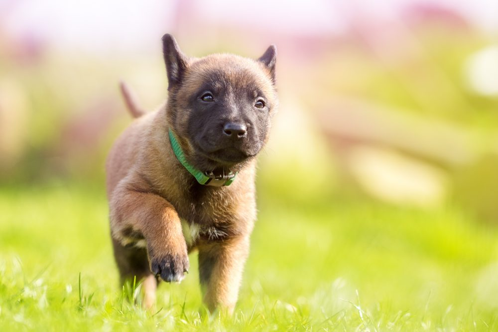 愛犬に長生きしてもらうためのエサの与え方
