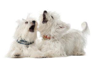 あなたは気付いてる?愛犬のストレスサイン!種類や原因・解消法は?