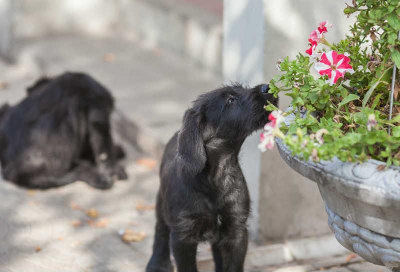 あなたの愛犬、肥満犬になってない?ダイエット法や生活習慣改善法をご紹介!
