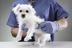 鎌倉市の動物病院4選!眼科診療が評判の病院など