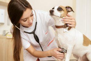 中野区でおすすめの動物病院2選!夜間対応可能施設あり