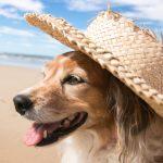 暑い夏に、愛犬の熱中症対策【4つのポイント】