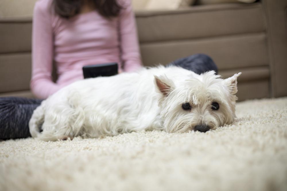 静電気の防止方法やグッズを使って犬を静電気から守ろう