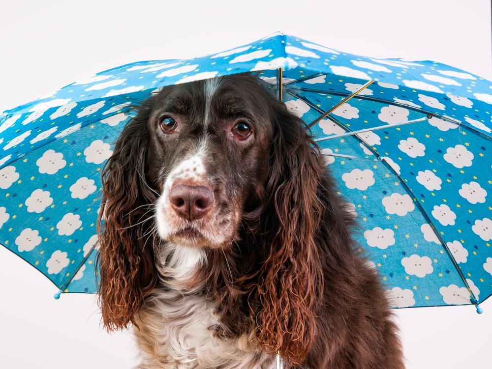 人にもうつる?カビによる犬の病気。梅雨・夏場に気を付けよう!