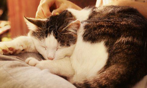 【獣医師監修】【猫の抜け毛対策】多い?少ない?猫の抜け毛で病気を疑うレベルの判断基準