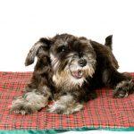 犬の寒さ対策に最適!ペット用ホットマットの種類と特徴