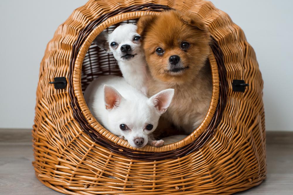 ココナッツオイルで愛犬の皮膚病対策をしよう!