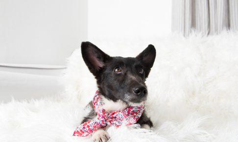 【おススメ!!】愛犬のための暑さ対策グッズ