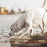 愛犬が暑さで食欲不振…夏バテ解消レシピ5選!2020年更新