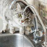 【獣医師監修】高齢や病気によって自力でお水が飲めないネコちゃんに上手にお水を与える5つの方法