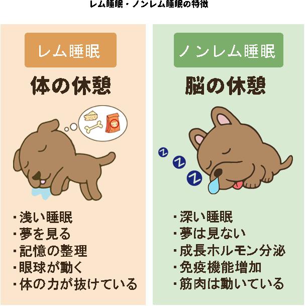 犬のレム睡眠・ノンレム睡眠の特徴