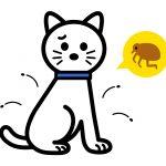 猫のダニの駆除剤とグッズは何がおすすめ?売れ筋商品のご紹介!