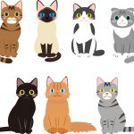 猫の種類別の性格|ペットショップでよく見るあの猫の性格は?8種ご紹介