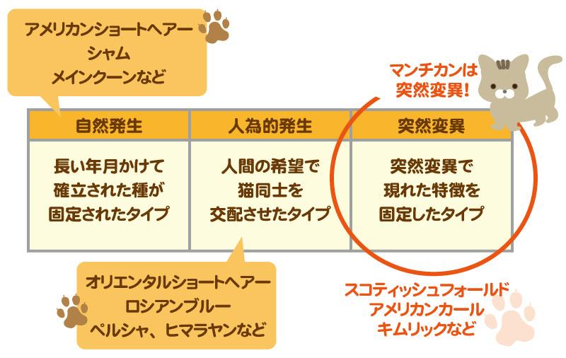 猫の純血種の3つのタイプ