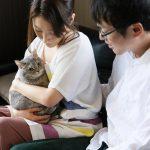 これだけ抑えればOK!初めて猫を飼う方が知るべき5つのポイント