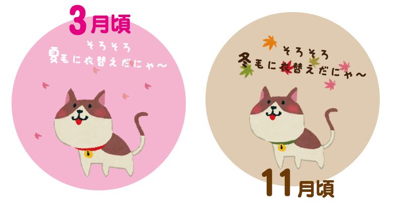 猫の換毛期の目安