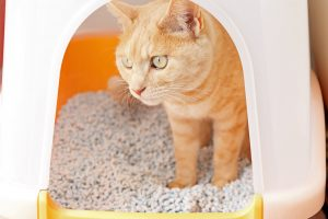 猫のトイレのしつけはスプレーを使って万全だ!噛み癖や爪とぎ防止にも☆