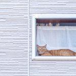 【猫の留守番】猫がさみしくないように快適に留守番をさせる3つの方法