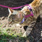 猫にリードをつけてお散歩って変?!初めての猫とのお散歩ガイド