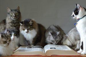 猫の多頭飼いを考えている方へ その問題点をご提案します