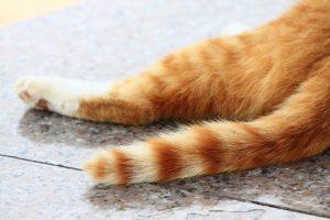 猫のしっぽは気持ちのバロメーター!覚えておきたい7つのしっぽの動き