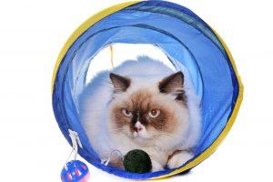 猫が喜んで留守番してくれるおもちゃ?電動ごろごろボールや猫トンネル