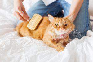 これがあれば猫のお手入れもラクチン!一押しの猫お手入れグッズ3つ