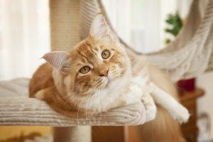 猫のしつけはどんな方法がある?爪とぎからトイレまで全部ご紹介します!