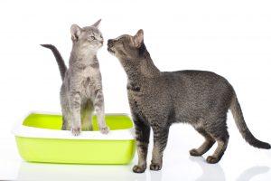 【獣医師監修】猫の尿スプレーの原因は?猫のマーキングの意味と4つの対策