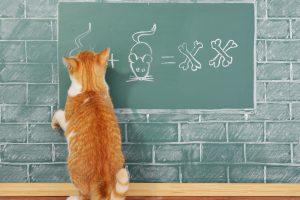 猫が壁にガリガリするのはしょうがない?家の壁を守る!猫の爪とぎ防止策