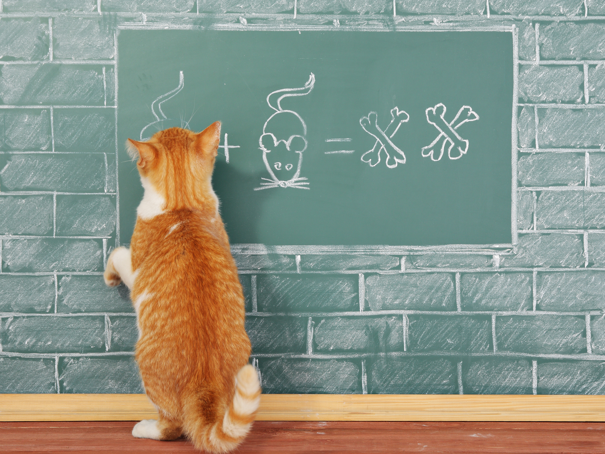 防止 猫 マーキング