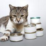 愛猫においしい食事を手作り!市販のツナ缶をそのままあげない理由とは