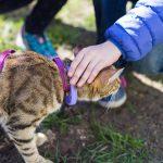 猫の散歩にハーネスがいいって本当?おすすめのハーネスと付け方