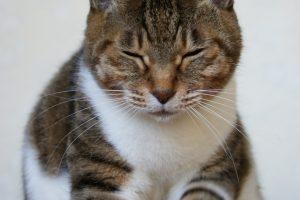 猫のしぐさで気持ちがわかる!甘えたい気持ち・リラックスしている時