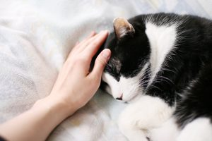 猫が撫でられて気持ちいいタイミング!猫メロメロの撫で方のコツとは