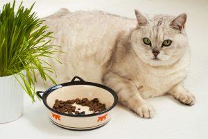 うちの猫、もしかして肥満なの!?【簡単!】猫の肥満度チェック