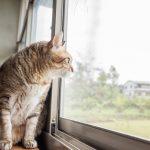 ズバリ室内飼いの猫に散歩は必要なの?散歩のメリット/デメリット