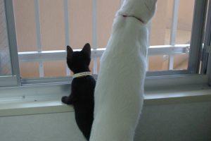子猫がケージでお留守番!室内の温度管理は短時間でも絶対忘れないで