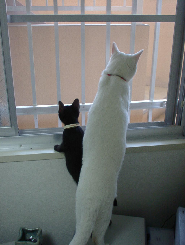 猫 生後2ヶ月 留守番