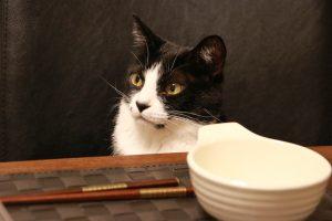 飼い主の食事中に猫がおねだりしてくる!食事中の猫のお困りエピソード