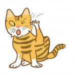 【獣医師監修】気をつけたい猫の皮膚の病気|こんな兆候があったら要注意!ノミダニ対策