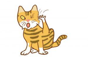 【獣医師監修】気をつけたい猫の皮膚の病気 こんな兆候があったら要注意!ノミダニ対策