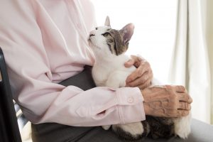 猫はこんな抱っこが大好き!猫が喜ぶ抱っことは?上手な猫の抱っこの仕方