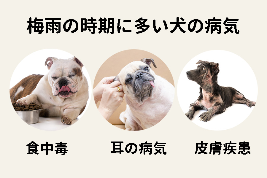 湿度が高い梅雨の時期!犬は病気になりやすい?原因と対策