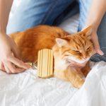 暴れる猫の上手なトリミング方法を教えて!ブラッシング、爪切り、耳掃除