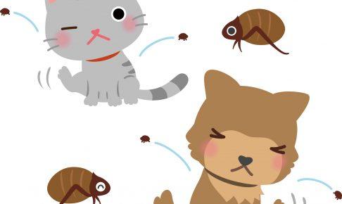 【獣医師監修】猫に寄生するダニとノミの種類と対策