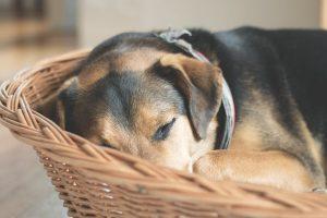 犬にもヒートショックがあるって本当?予防のための7つのアドバイス