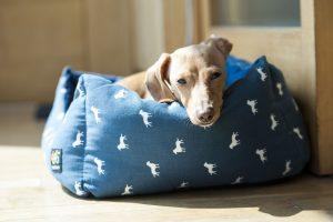 犬の病中や回復時におすすめしたい暖房器具「湯たんぽ」のメリット4つ
