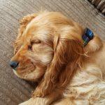 大切な愛犬を長生きさせたい!7個の秘訣