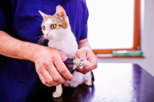 出張トリミングは猫へのストレスレス!室内飼いネコにメリット
